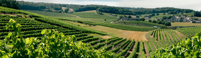 Vignoble Cognac France
